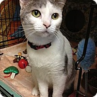 Adopt A Pet :: Celine - Byron Center, MI