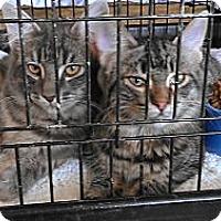 Adopt A Pet :: Dexter - Morgan Hill, CA
