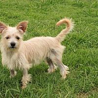 Adopt A Pet :: Buttercup - Plainfield, CT