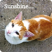 Adopt A Pet :: Sunshine - Somerset, KY