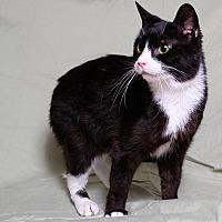 Adopt A Pet :: Ellie - Lexington, KY