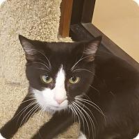 Adopt A Pet :: Tuck - Gadsden, AL
