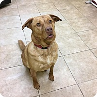Adopt A Pet :: Jenner - Reisterstown, MD