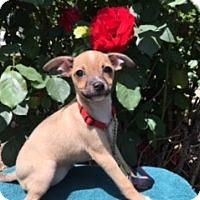Adopt A Pet :: LACI - Elk Grove, CA