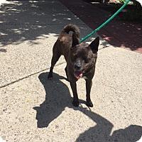 Adopt A Pet :: Zepplin - Batavia, OH