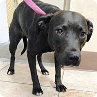 Adopt A Pet :: Little Mama - Cincinnati, OH