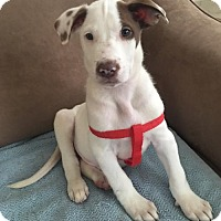 Adopt A Pet :: Ghost - Royal Palm Beach, FL