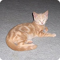 Adopt A Pet :: Melva - Richmond, VA