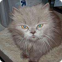 Adopt A Pet :: Mr.Tuffy - NEWCASTLE, CA