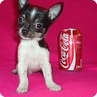 Adopt A Pet :: Mason - Hagerstown, MD