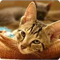 Adopt A Pet :: FlapJack - Jenkintown, PA