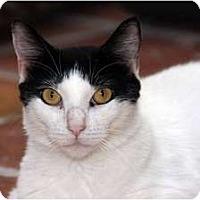 Adopt A Pet :: Beauty - Scottsdale, AZ