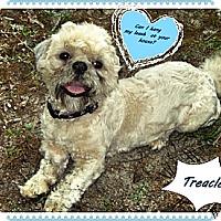 Adopt A Pet :: Treacle - Franklinton, NC