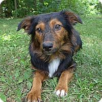 Adopt A Pet :: Renee - Mocksville, NC