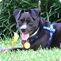 Adopt A Pet :: ROBERT - North Augusta, SC