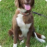 Adopt A Pet :: Jazzmine - Adoption Pending - Tipp City, OH