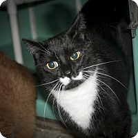 Adopt A Pet :: Shadow - Rockaway, NJ