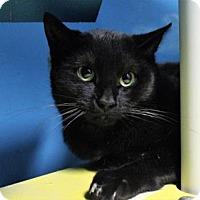 Adopt A Pet :: Corvus - West Des Moines, IA