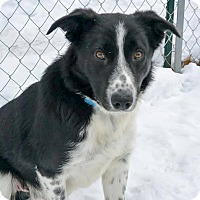 Adopt A Pet :: Mister - Meridian, ID