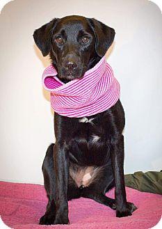 Labrador Retriever Mix Dog for adoption in Kingston, Tennessee - Mia