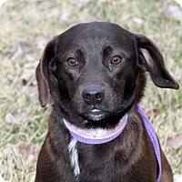 Adopt A Pet :: Tillman - Liberty Center, OH