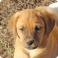 Adopt A Pet :: Spanky - kennebunkport, ME