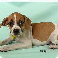 Adopt A Pet :: Ruby - Kerrville, TX