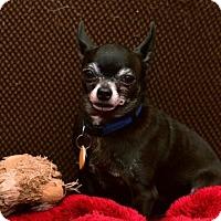 Adopt A Pet :: TINY - Mahopac, NY