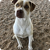 Adopt A Pet :: Jackson - Chino Valley, AZ