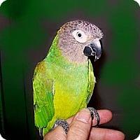 Adopt A Pet :: Isa - Punta Gorda, FL