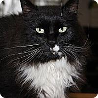 Adopt A Pet :: Felix - Maxwelton, WV