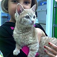 Adopt A Pet :: Sandy - Patterson, NY