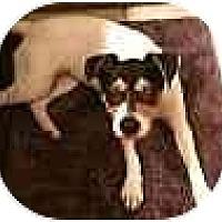 Adopt A Pet :: ZaZa in Houston - Houston, TX