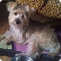 Adopt A Pet :: Cain - Hamilton, ON