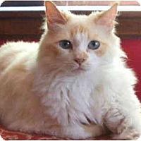 Adopt A Pet :: Simone - Keizer, OR
