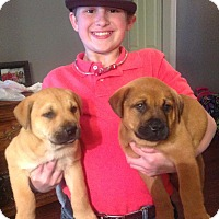 Adopt A Pet :: Mocha - Homewood, AL