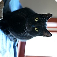 Adopt A Pet :: Brody - Speonk, NY