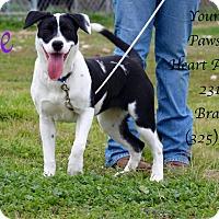 Adopt A Pet :: Jackie - Buchanan Dam, TX