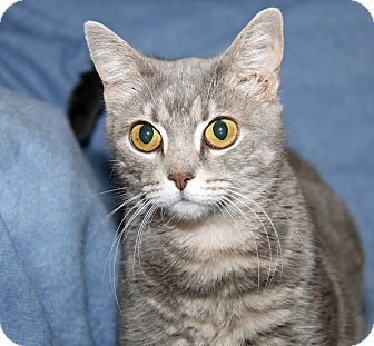 Domestic Shorthair Cat for adoption in Marietta, Ohio - Bright Eyes (Spayed) - Update