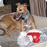 Adopt A Pet :: June - Tucson, AZ