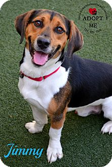 Basset Hound Mix Dog for adoption in Youngwood, Pennsylvania - Jimmy