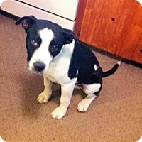 Adopt A Pet :: Buster - Pulaski, TN