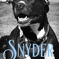 Adopt A Pet :: Snyder - Cheney, KS