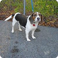 Adopt A Pet :: Athena - available 5/1 - Sparta, NJ