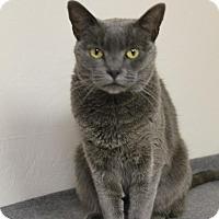 Adopt A Pet :: Ginny - Fountain Hills, AZ