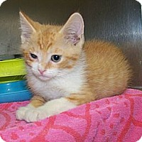 Adopt A Pet :: Martin - Dover, OH