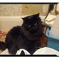 Adopt A Pet :: Satin - london, ON
