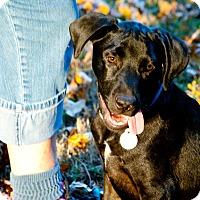 Adopt A Pet :: Colt - Homewood, AL