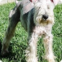 Adopt A Pet :: Denny - Renton, WA