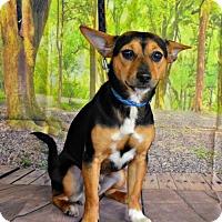 Adopt A Pet :: Morris - Yreka, CA
